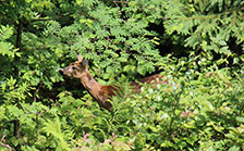 holiday apartments ellmau with deer