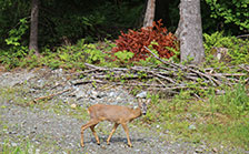 holiday apartments ellmau with deer in the forest