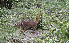 holiday apartments ellmau deer with snow
